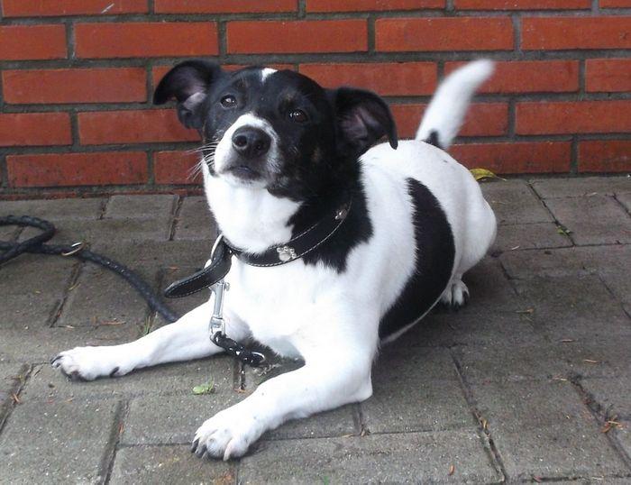 Fundhund Lenny wurde vermutlich in Hage ausgesetzt und sucht ein neues Zuhause. (Foto: Tierheim Hage)