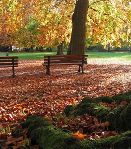 Laub im Stadtpark (Foto: Darkone / Wikipedia, cc-by-sa)
