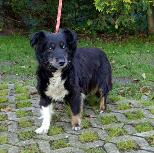 Frieda wurde am 15.11.2013 an der B72 in Höhe Marienhafe (Score-Tankstelle) aufgefunden. (Foto: Tierheim Hage)