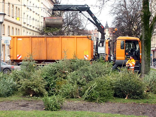 Traditionell werden in München Christbäume für den Tierpark Hellabrunn als Tiernahrung gesammelt und abgeholt. In Norden kümmert sich die Jugendfeuerwehr darum. (Foto: Harald Bischoff / Wikipedia, cc-by-sa 3.0)