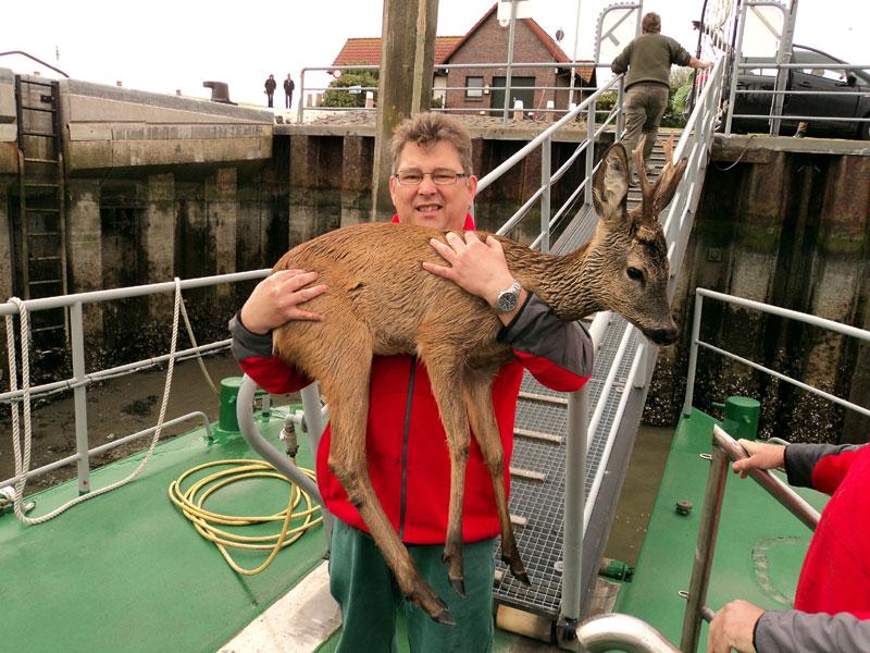 Seenotretter Ralf Jüttner von der Station Norderney mit dem vor Norddeich aus dem Wattenmeer geretteten Reh (Foto: DGzRS/Die Seenotretter)