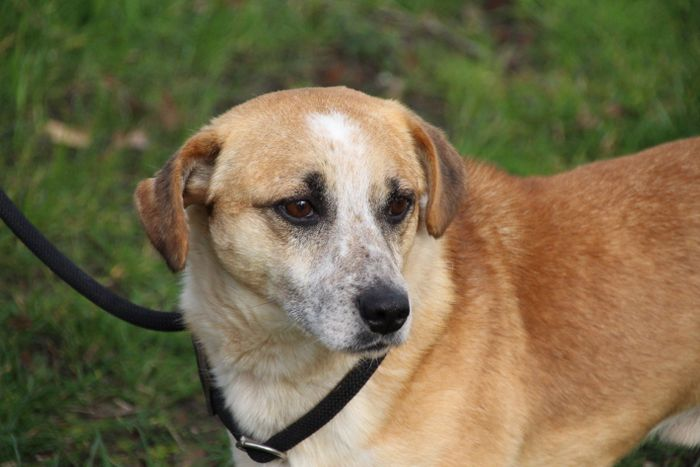 Fundhund Randy aus dem Tierheim Hage sucht ein neues Zuhause. (Foto: Tierheim Hage)