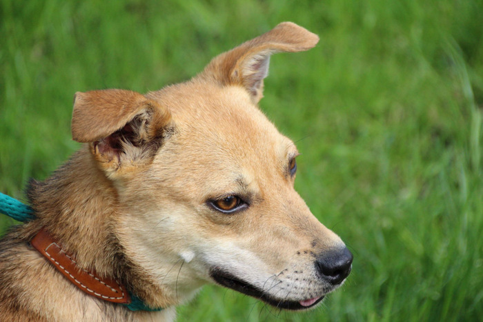 Powerhund Duduta sucht ein neues Zuhause. (Foto: Tierheim Hage)