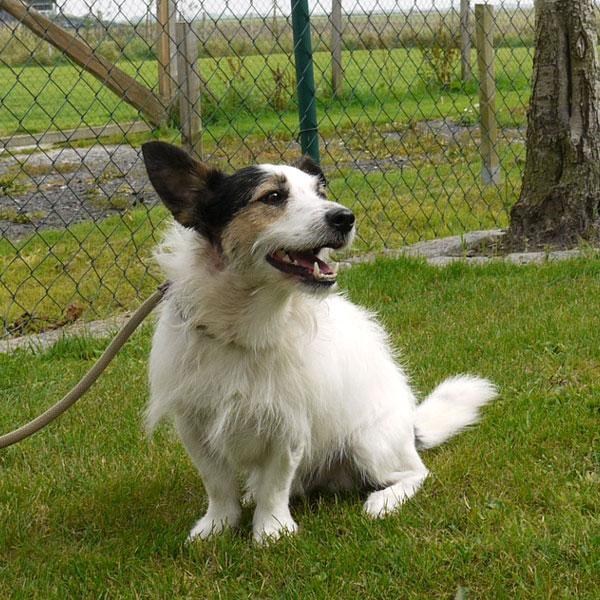 Jacky kam als Pensionstier ins Tierheim, weil sein Frauchen schwer erkrankt war. (Foto: Tierheim Hage)
