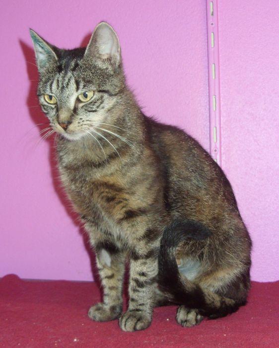 Die Katzendame Josi sucht ein neues Zuhause. (Foto: Tierheim Hage)