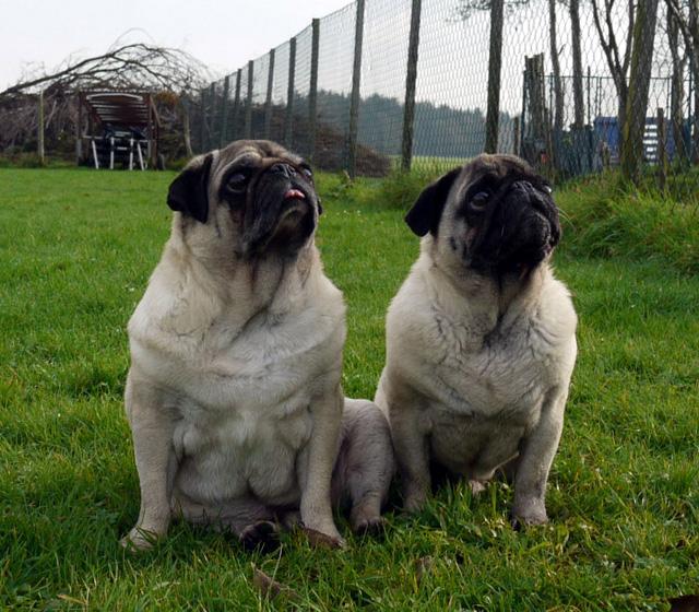 Murphy & Anton kamen Anfang November 2014 als Abgabetiere ins Tierheim, weil sich die Halter getrennt haben. (Foto: Tierheim Hage)