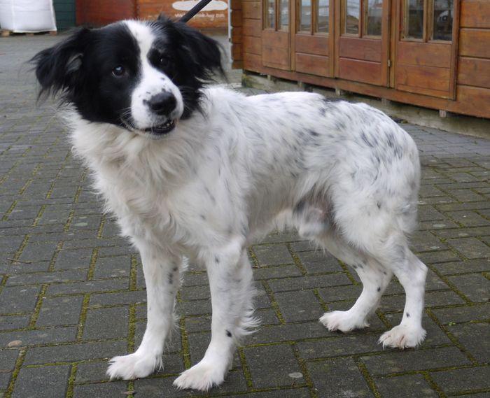 Moritz wurde am 20.11.2014 in der Cankebeerstraße in Westdorf aufgefunden. (Foto: Tierheim Hage)