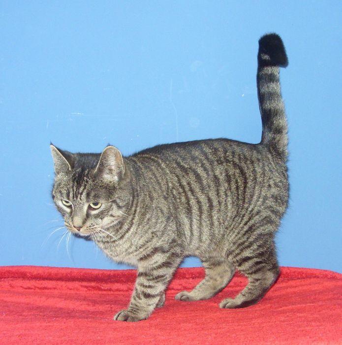 Katzendame Zira wartet im Tierheim Hage auf ein neues Zuhause. (Foto: Tierheim Hage)