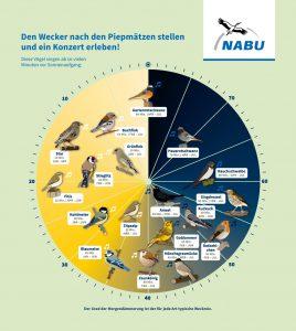 Die Vogeluhr des NABU zeigt, wann welche Vögel zu hören sind. (Bild: NABU/Jenni Ottilie Keppler & Carolin Oelsner)
